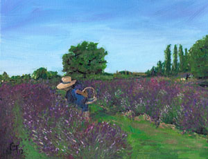 Lavender Farm Note Card